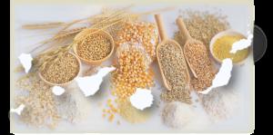 Cereales de Canarias: 5 Consejos esenciales para elegir en Canarias cereales saludables