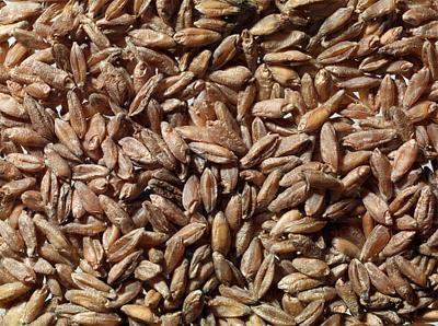 Tritordeum: una harina versátil y saludable
